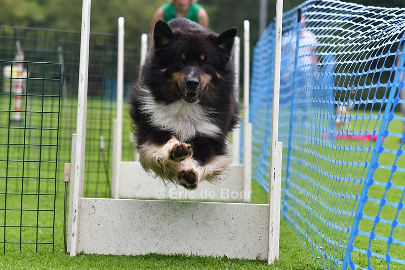 Foto's flyball workshop